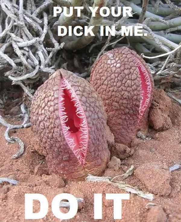 Vagcactus