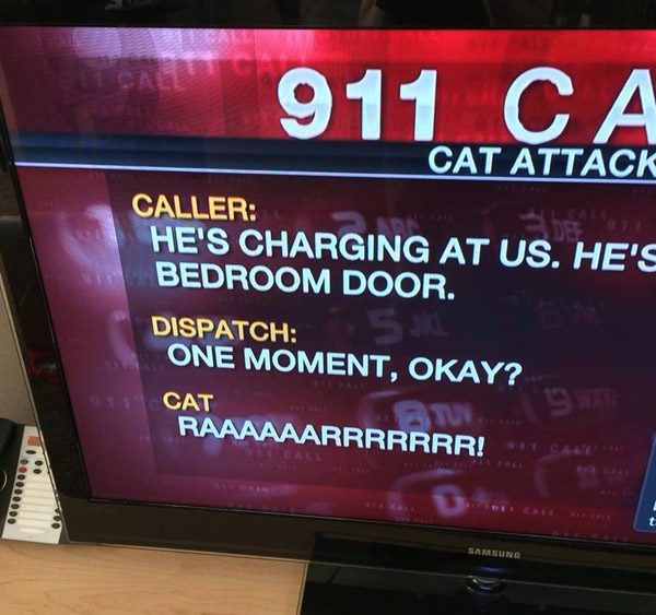 Angry Cat Local News