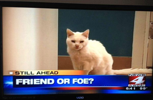 Cat Friend Or Foe