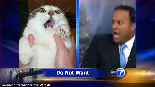 Do Not Want Cat News