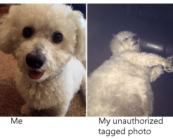 Dog Tagged Vs Profile