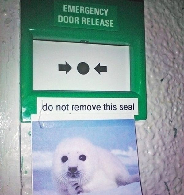 Dont Remove Seal Funny Trolls