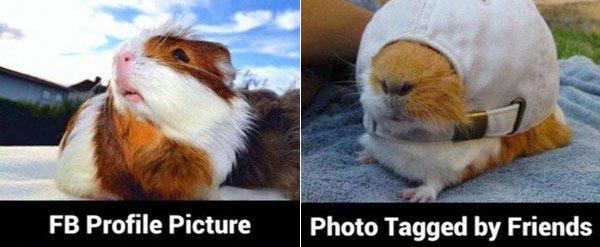 Gunea Pig Taggedpic
