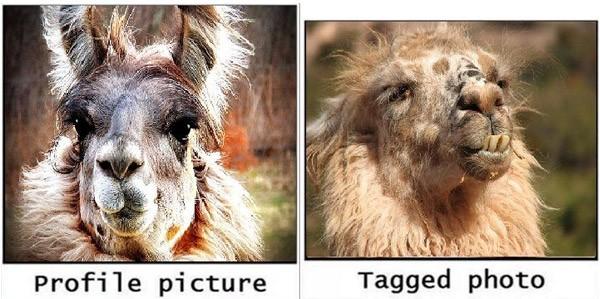 Llama Profile Vs Tagged