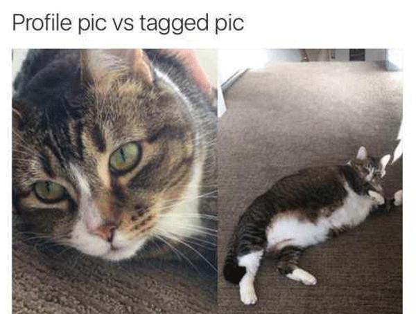 Profile Pic  Vs  Tagged Pic Fatcat