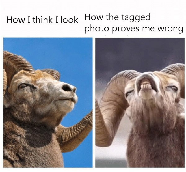 Profile Pic Vs Tagged Pic Ram