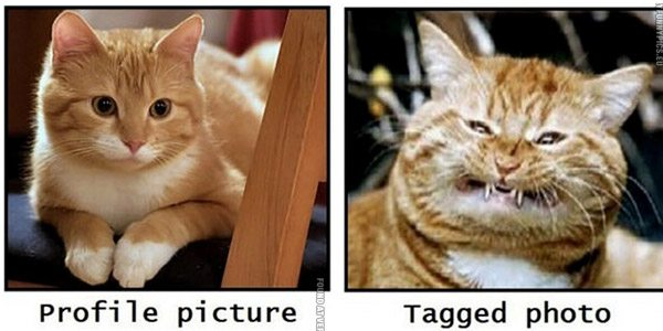 Profile Picture Vs Tagged Cat