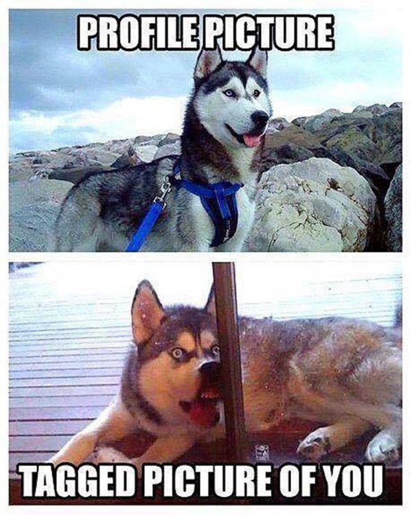 Profile Picture Vs Tagged Husky