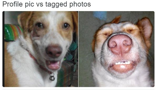 Profile V Tagged Derpdog