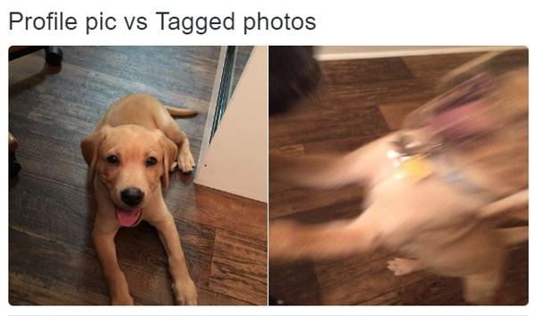 Puppy Profile Pic V Tagged