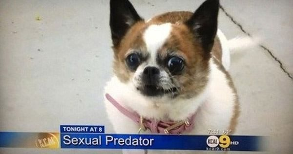 Sexual Predator Dog