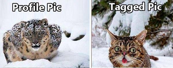 Snow Leppard Taggedpic