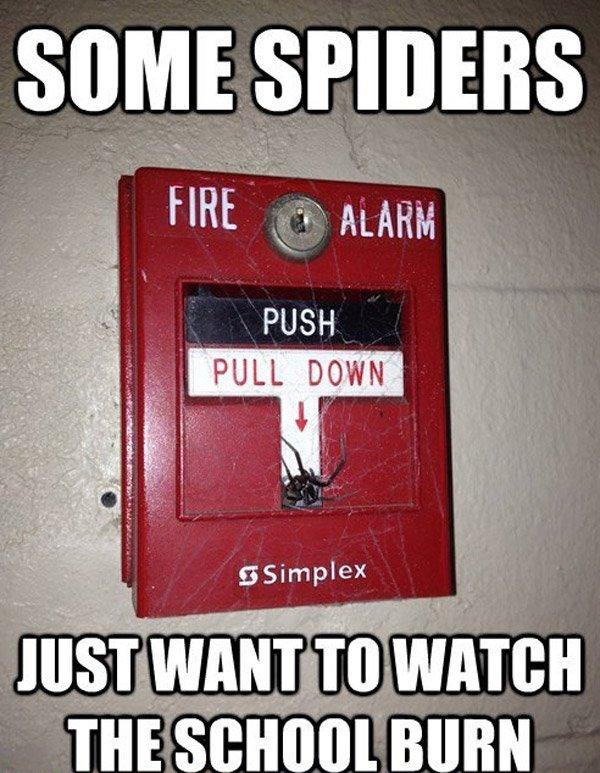 Spider Fire Alarm
