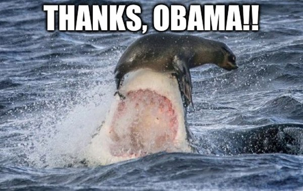 Thanks Obama Shark