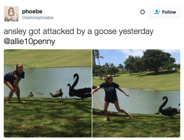 Ansley Goose