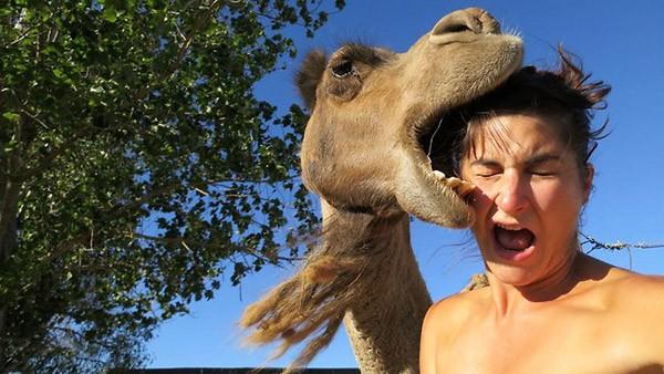 Camel Fail