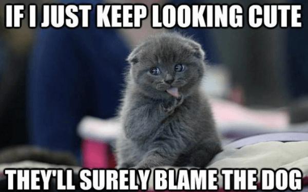 Cat Memes Looking Cute