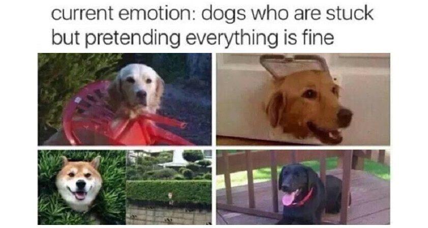 Dogs Pretending