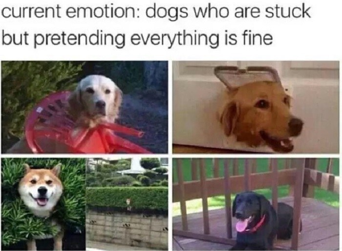 Dogs Who Are Stuck