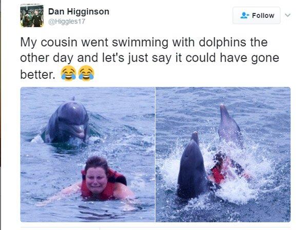 Dolphin Cousin