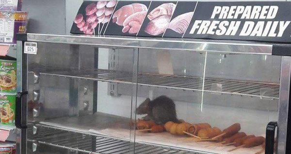 Fresh Rat