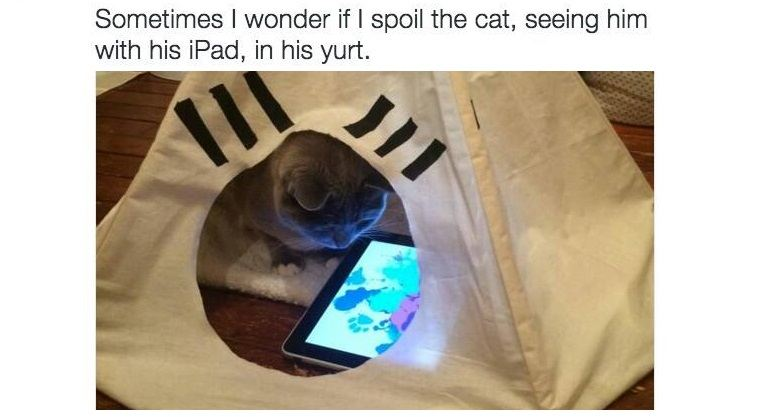 Funny Memes About Cats