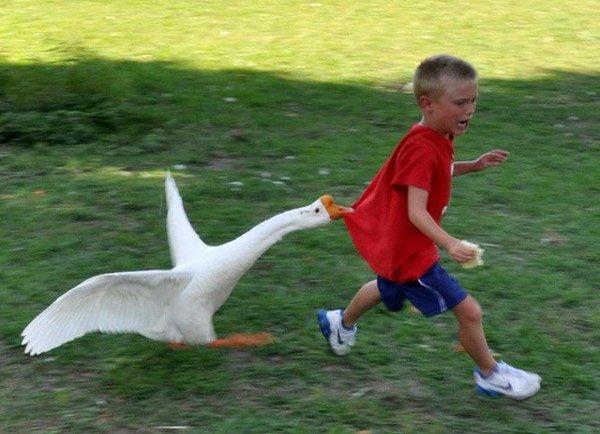 Goose Kid