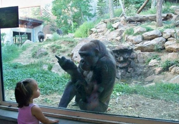 Gorilla Flipoff