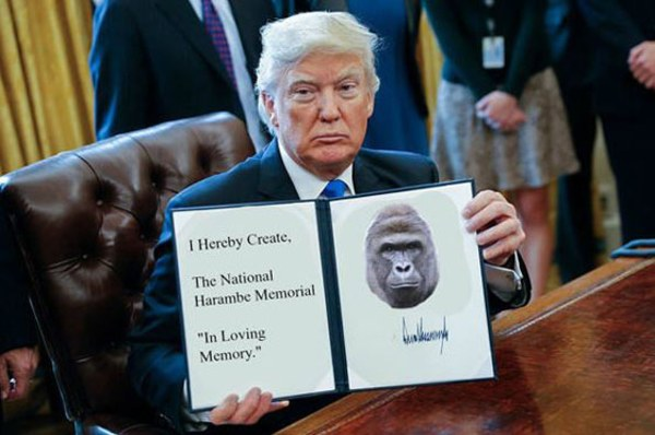 Harambe Donald Trump Executive Order Memes