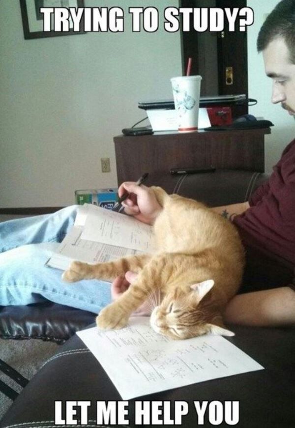 Helping You Study