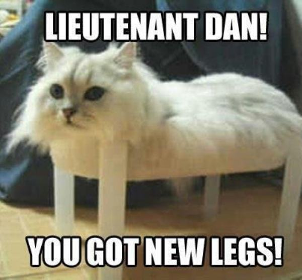 Funny Cat Memes: 37 Of The Best Cat Memes The Internet Has Ever Made