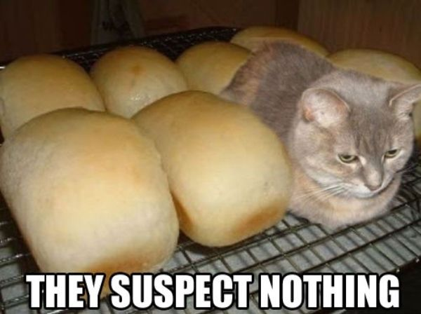 Loafing Funny Cat Memes