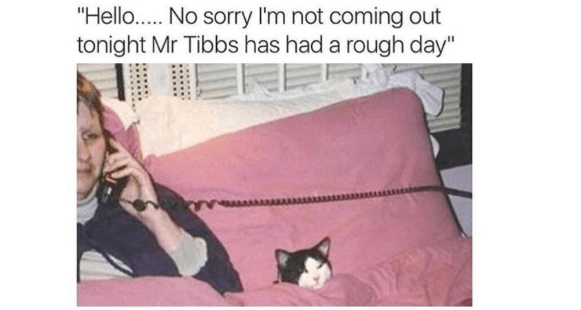 Mr Tibbs Had A Rough Day