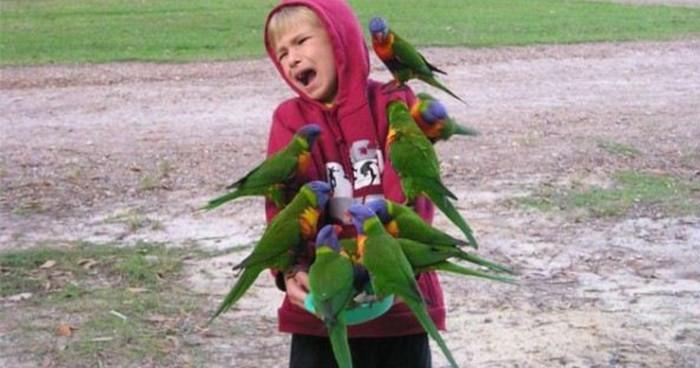 Sad Parrot Boy