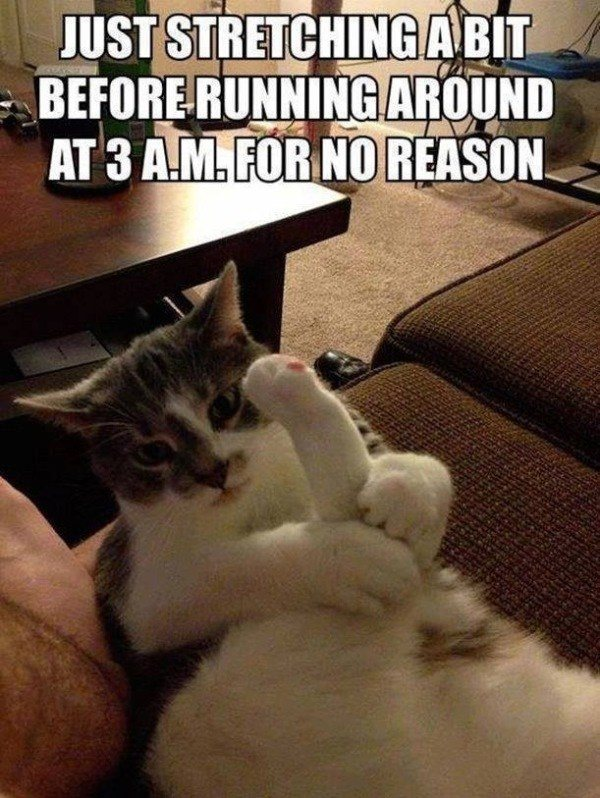 Stretching Hilarious Cat Memes