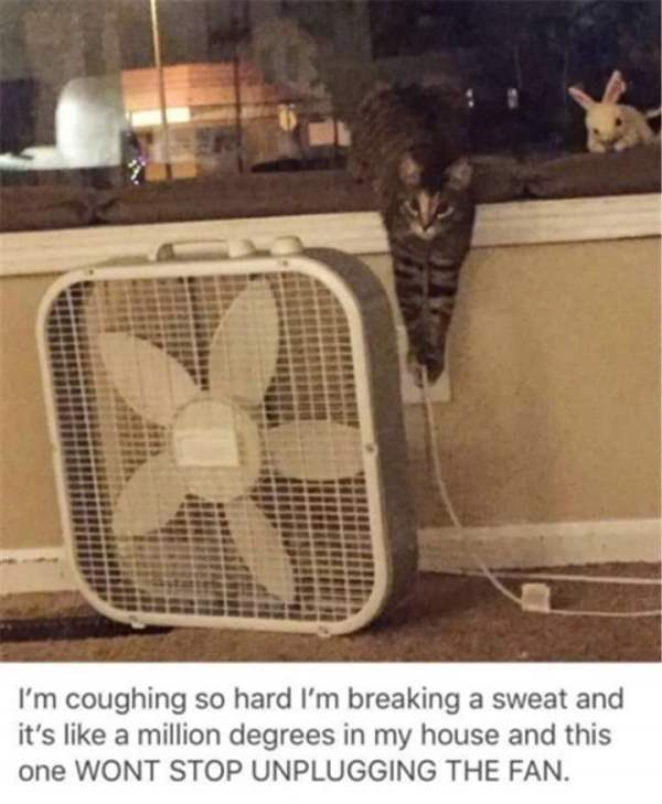 Unplugging The Fan