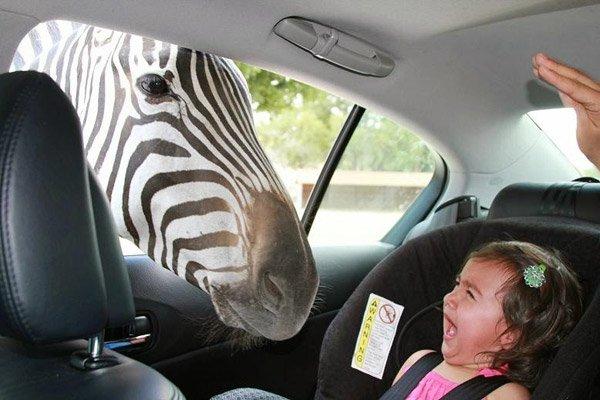 Zebra Kid