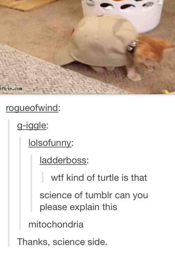 Cat Mitochondria