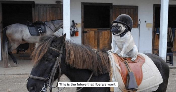 OG Horse