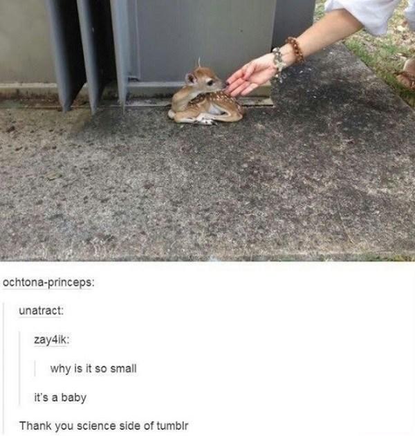 Baby Deer Science Tumblr Funny