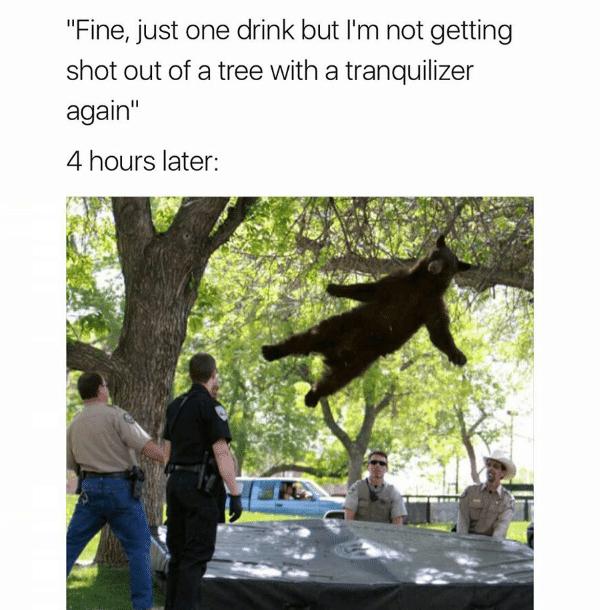 Bear Trampoline