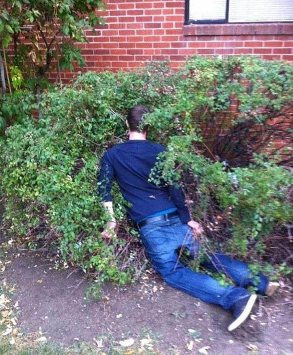 Bush Nap