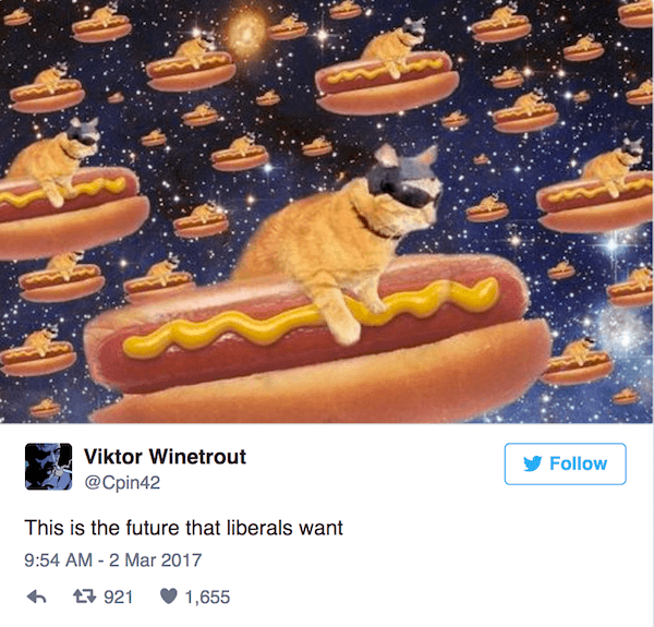 Cat Hot Dog