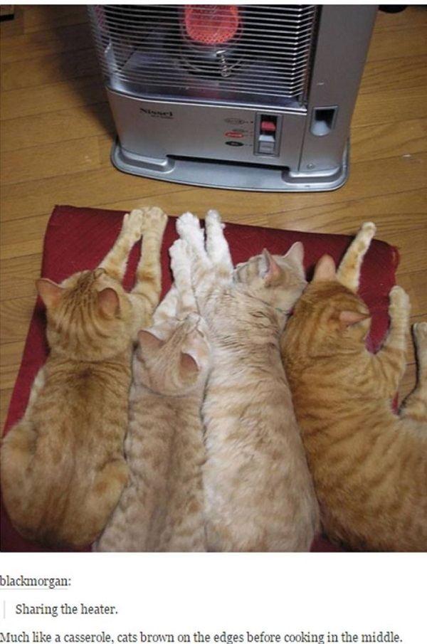 Cats Like Casserole