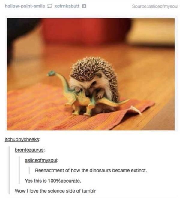 Dinosaur Hedgehog Extinction