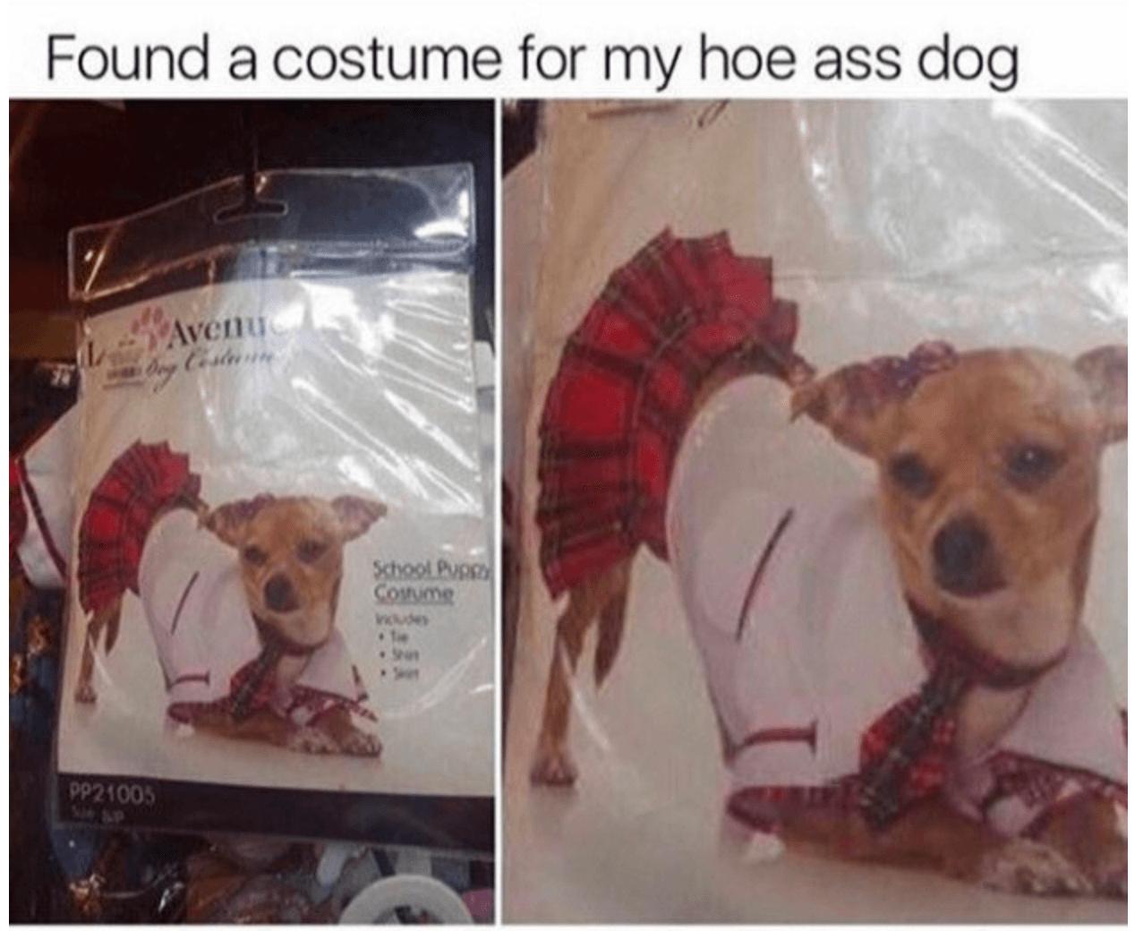 Dog Thot