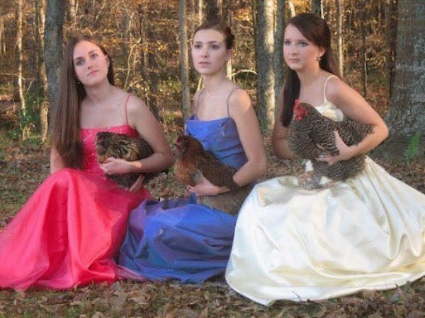 Prom Chickens Hilarious Redneck Photos