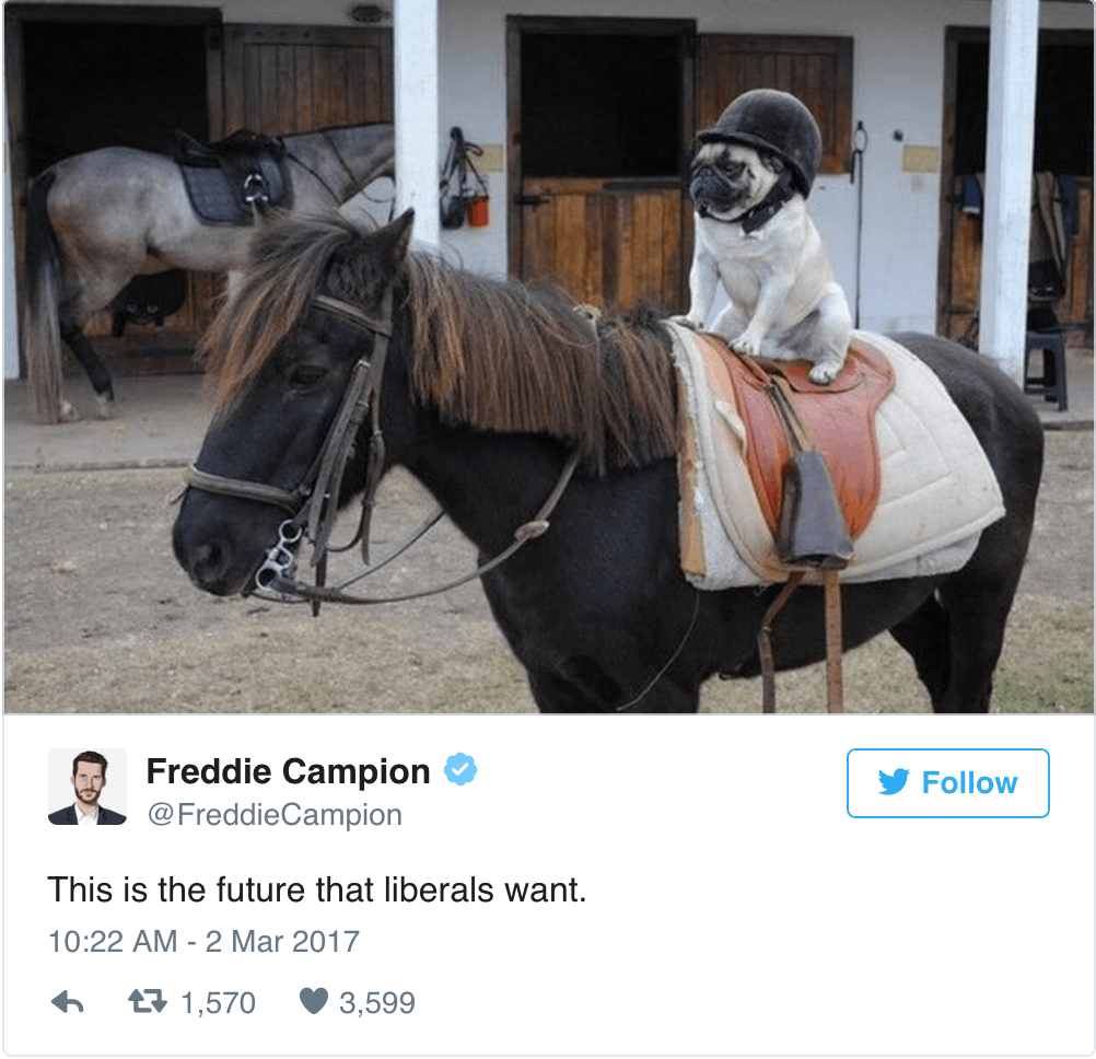Pug Horse
