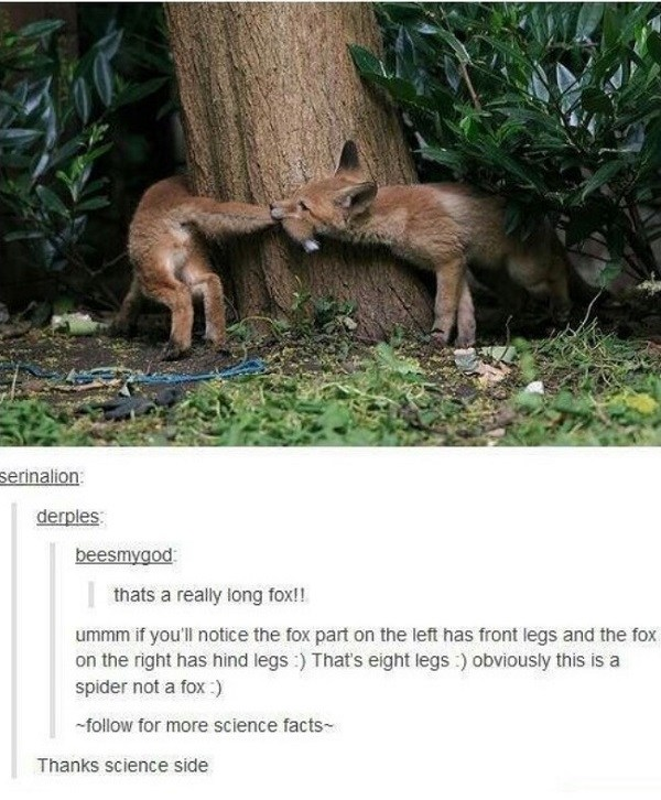 Spider Fox
