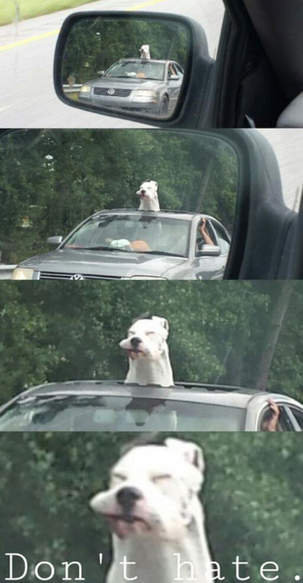 Sunroof Dog